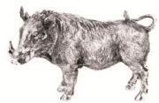 Warthog  -  13 x 20 cm (TNAC 14)