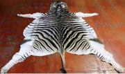 Zebra Skin  -  A Grade (ERZEBA)