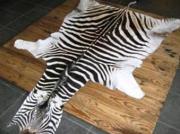 Zebra Skin  -  Trophy Grade (ERZEBTR)