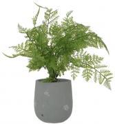 Fern Potted Plant  -  40 cm (TNZ2 79)
